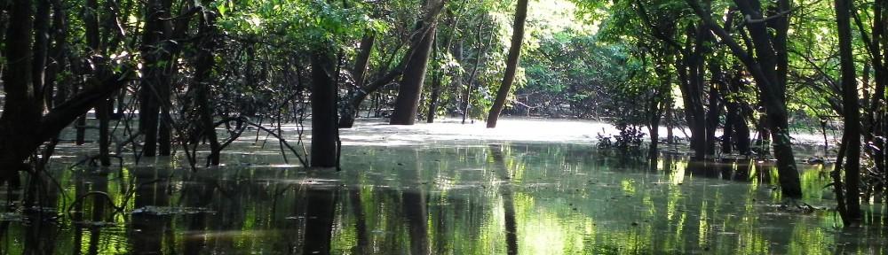 Eije Manaus Services